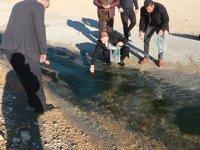 Mut'taki sulama göletinde balıklar kıyıya vurdu