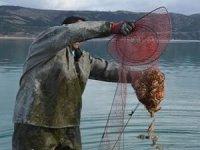 Kaçak avlanan bin 630 kilogram kerevit göle bırakıldı