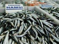 Balıkçılar yeni yılda hamsi sevinci yaşıyor