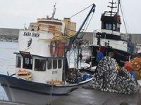 Batı Karadeniz'de balıkçılar bu sezon umduğunu bulamadı