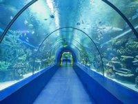 Trabzon'da Tünel Akvaryum simge proje olacak
