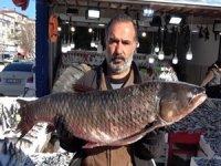 25 kiloluk balık görenleri şaşırtıyor