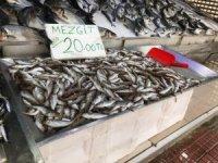 Kötü hava şartları balık avcılığını olumsuz etkiliyor