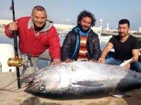 Dev orkinos balıkçıları Yunanistan'a sürükledi