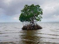 2100 yılında denizin 60 santim yükselmesi bekleniyor