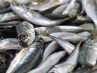 Çanakkale´de, av yasağı sonrası balık fiyatları aynı