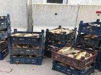 Kaçak avlanan 700 kilogram balık ele geçirildi