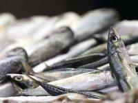 2020 yeni balık av sezonu ne zaman başlayacak?