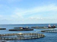 Kültür balıkçılığından 374 milyon dolar gelir