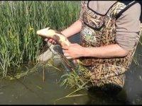 Beyşehir Gölü'nde yapılan denetimlerle üreme dönemindeki balıklar korunuyor