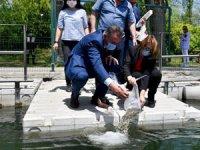 Büyükşehir 14 bin yavru sazan balığını suyla buluşturdu