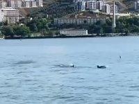 Bursa'da  yunuslar sahile geldi