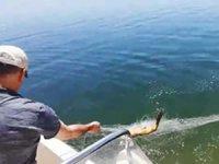 Kaçak balık avlayan 63 kişiye 73 bin lira para cezası verildi