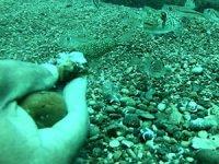 Balon Balığı sürüsünü elleriyle besledi
