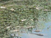 Deniz Gölü'ndeki balık ölümlerine inceleme
