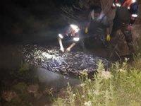 Van'da 20 ton inci kefali kurtarıldı