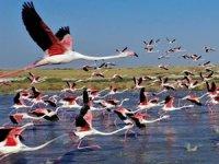 Flamingoların Türkiye'deki yaşam cenneti: Tuz Gölü