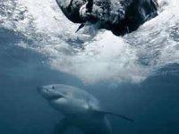 Avustralya'da sörfçü genç, köpek balığı saldırısında öldü