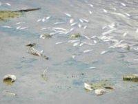 Lüleburgaz Deresi'ndeki balık ölümleri korkuttu
