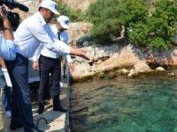 Kaş'ta denize 15 bin yavru balık bırakıldı