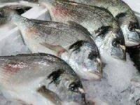 11 balık türü tescil edildi