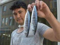 Oltalara takılan palamutlar balıkçıları umutlandırdı