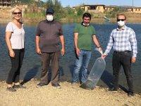 Hüyük'te göletlere 44 bin yavru sazan balığı bırakıldı
