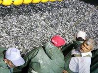 Çanakkale'de yeni balık sezonu bereketli başladı