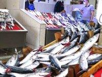 Yeni başlayan balık sezonu palamut avı ile umut verdi