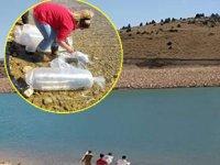 Sınıryer Göleti'ne 20 bin pullu sazan yavrusu bırakıldı