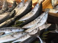Palamut, balıkçının da vatandaşın da yüzünü güldürüyor