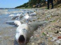 Barajlar kuruyor, balıklara can suyu verildi