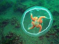Ay denizanası için 'değdiğinde yakar' uyarısında bulunuldu