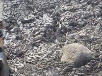 Balçıklaşan gölde binlerce balık telef oldu