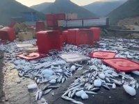 Antalya'da tırın dorse kapağı açıldı, tonlarca balık yola savruldu