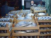 Balıkçılar, Akçakoca Limanı'na binlerce palamutla döndü
