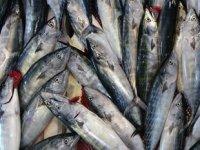 Palamut bereketi balıkçıların yüzünü güldürdü