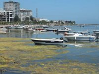 Kurupelit Yat Limanı'nda dolgudan vazgeçildi