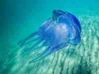 Mustafa Sarı: Denizanaları kirli sahilleri temizleme noktasında doğal yardımcı