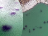 Baraj gölündeki balıkların kümeler halinde durmasının nedeni ortaya çıktı