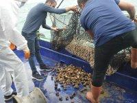 Deniz salyangozu ihracatından 3 milyon dolar gelir elde edildi