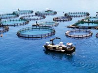 Çevre ve Şehircilik Bakanlığı, balık çiftliği yapımına yasak getirdi