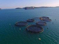 Balık çiftliklerinin deniz kıyılarından uzaklığı yönetmelikle belirlendi