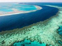 Büyük Set Resifi'nde 500 metre yüksekliğe sahip mercan kulesi bulundu