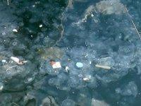 İstanbul Boğazı'nı denizanaları bastı