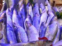 Kefal, tezgâhların en ucuz balığı oldu