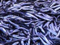 Hamside istenilen avın olmaması ihracatı olumsuz etkiledi