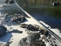 Görele'de katı atık bertaraf tesisindeki çöplerden çevreye atık su sızdı