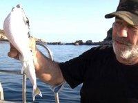 Zehirli balon balıkları, Kuzey Ege'ye ulaştı