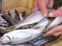 Tezgahlarda barbun, mezgit ve çinakopa talep arttı